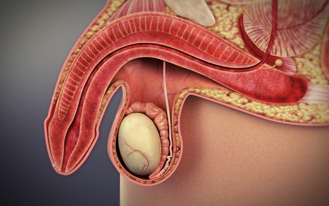 Alternativas de tratamiento en pacientes con disfunción eréctil